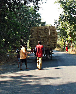 hay on a bullock cart