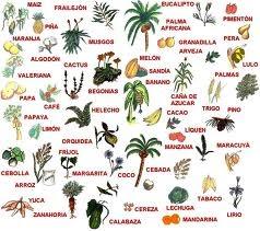 Salvemos a las selvas humedas la flora en la selva humeda en m xico - Pisos en estepa ...