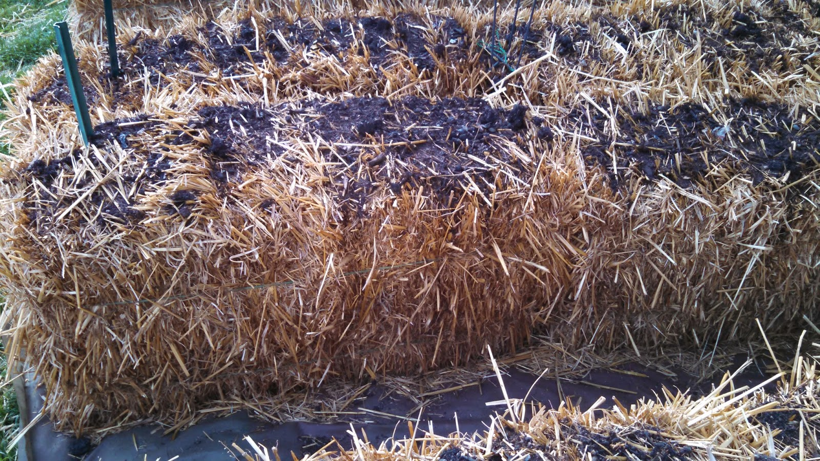 Day 7, Before Fertilizer, Side of Bale
