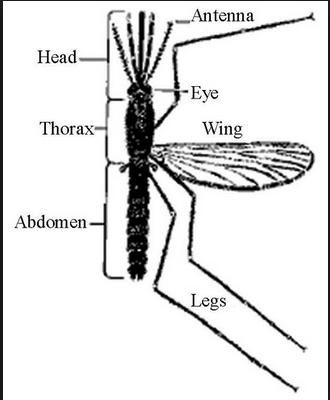 Sudah adakah robot sebesar Nyamuk?