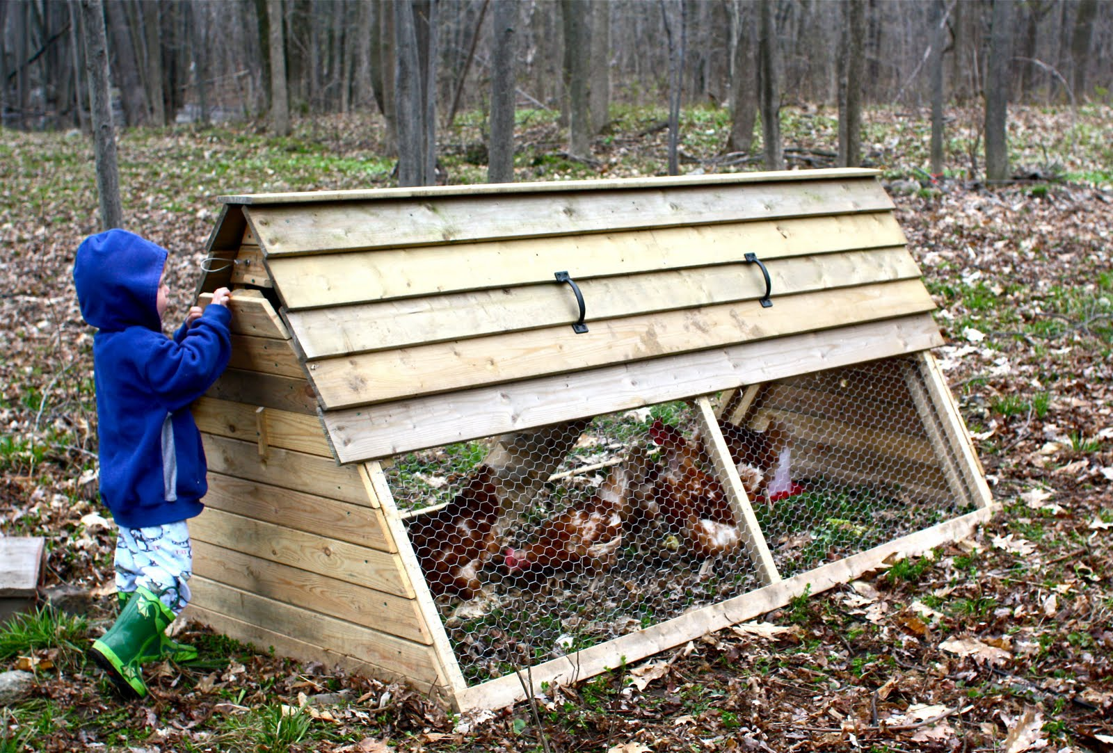 the high chair wordless wednesday our backyard chicken coop