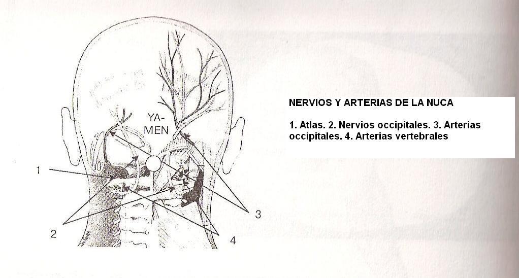 El tratamiento de la hernia de la columna vertebral podmorom de las abejas