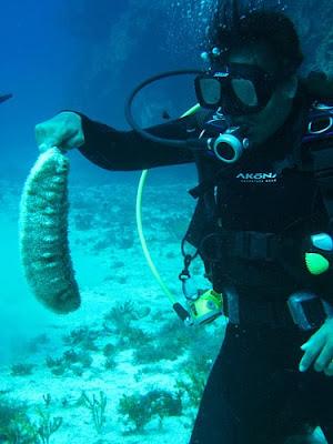 furry sea cucumber 03 ΔΕΙΤΕ: Τα πιο παράξενα πλάσματα που έχουν βρεθεί στην θάλασσα!