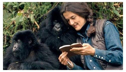 Una pizca de cine m sica historia y arte dian fossey for Gorilas en la niebla