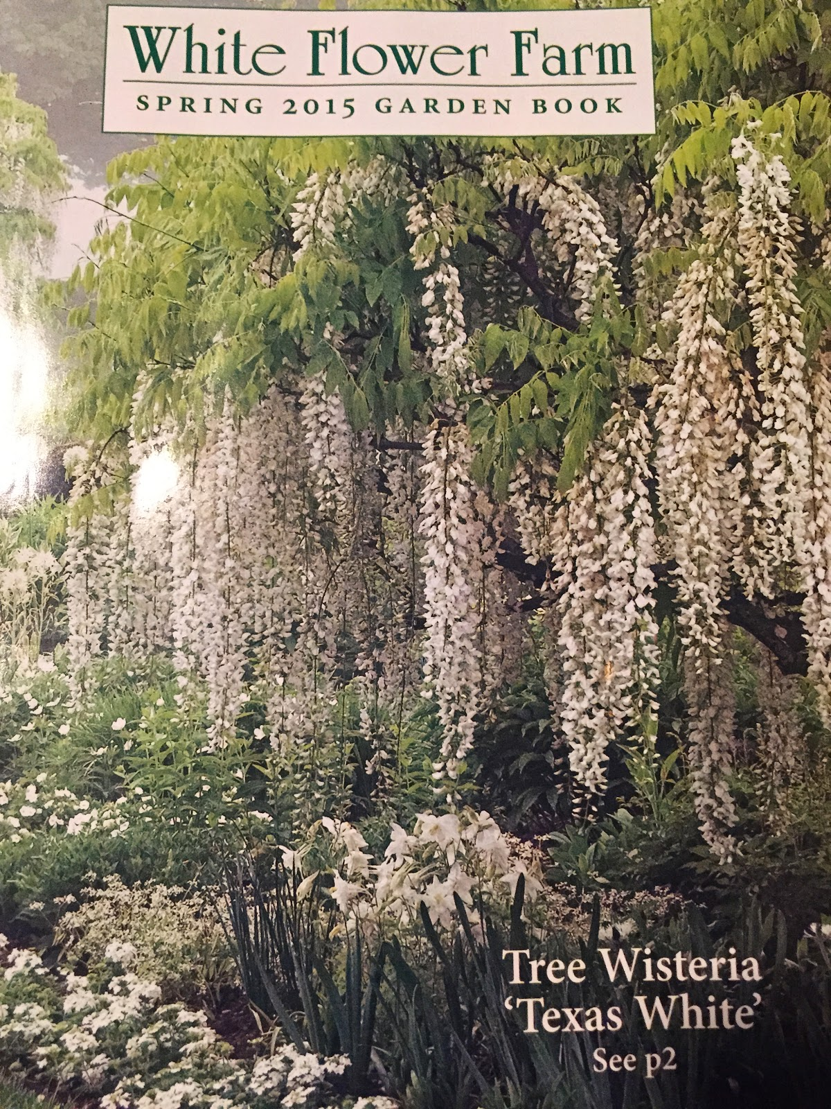 White flower farm catalog gallery flower decoration ideas bunny haven manor january 2015 one of the main sources of my covetous material longing the mightylinksfo
