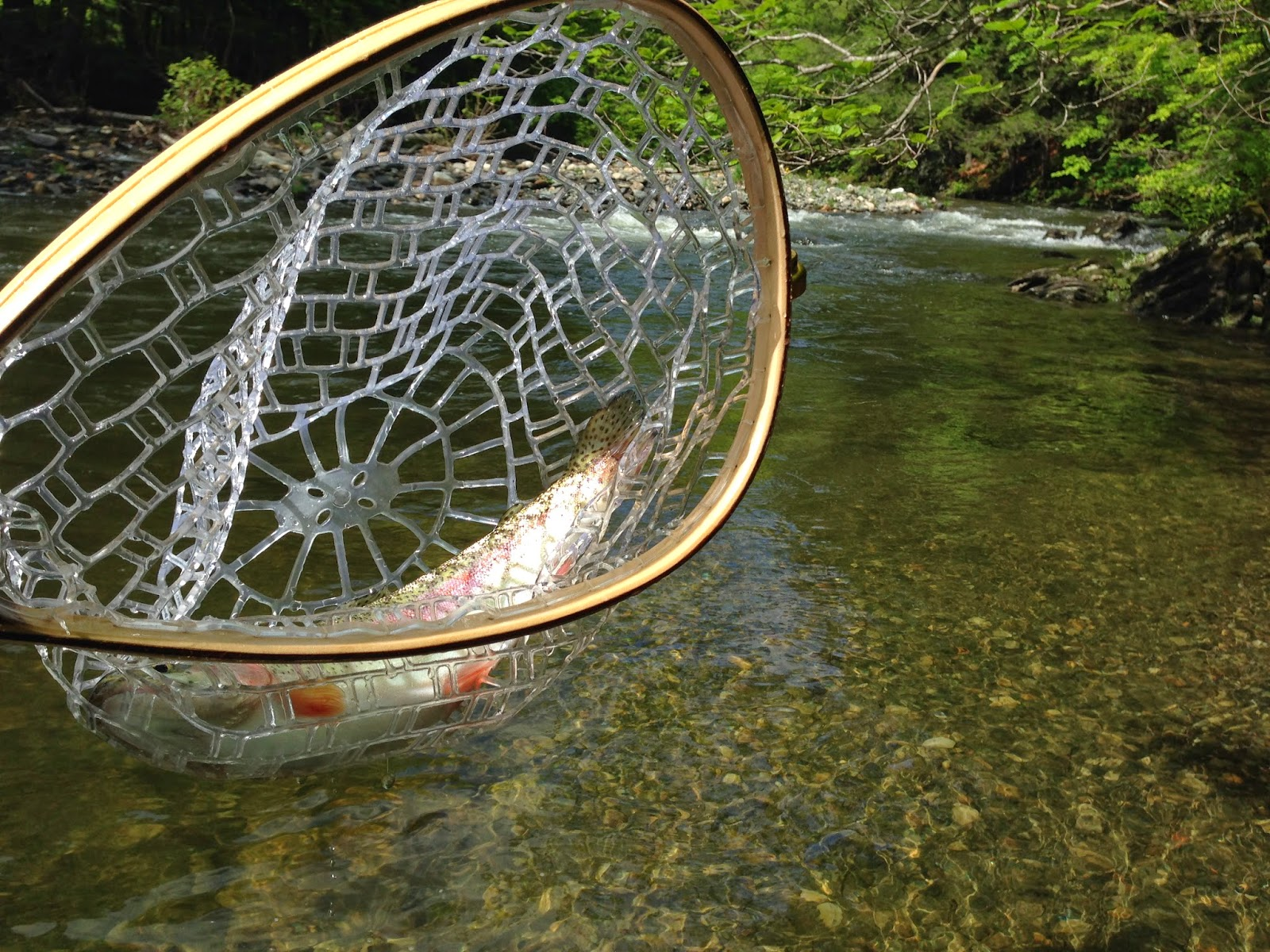 Fly fishing in new england green river for New england fishing
