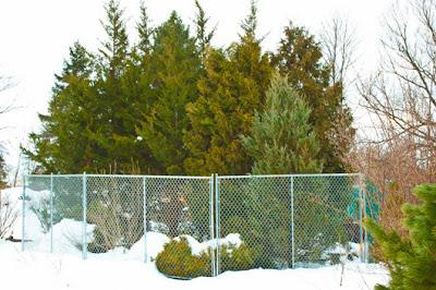 Prayer Gardeners Blog Installing Deer Protection Around