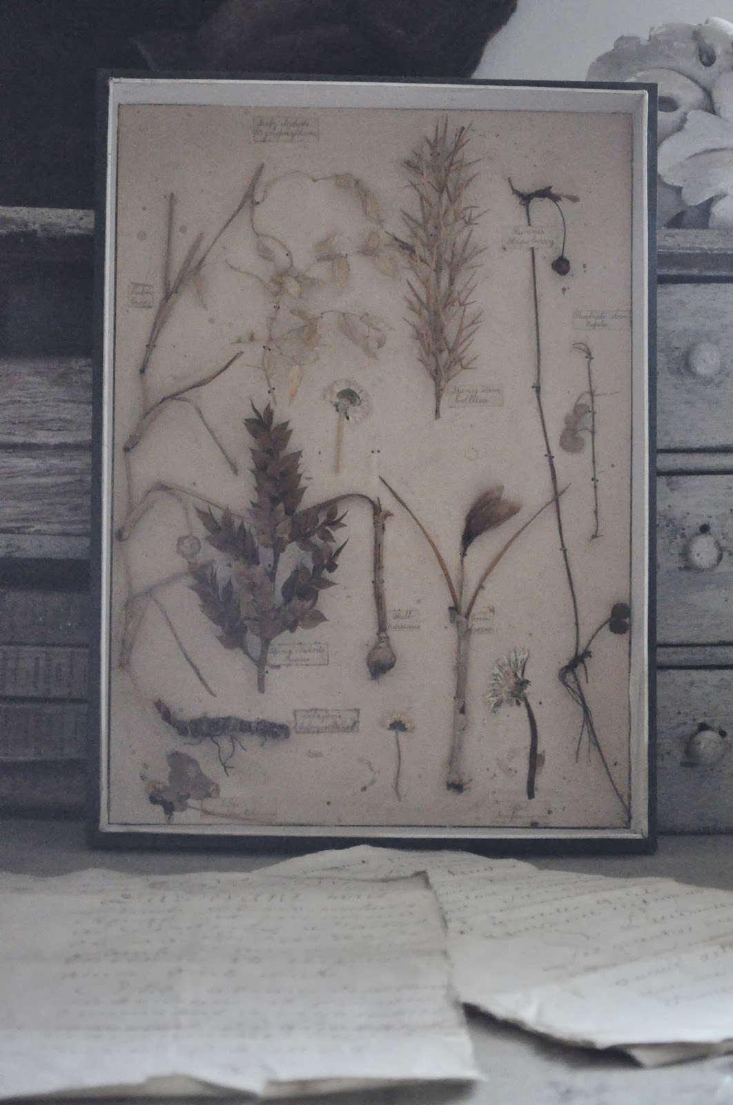 la m re d 39 une parisienne vide son grenier herbier sous vitrine. Black Bedroom Furniture Sets. Home Design Ideas