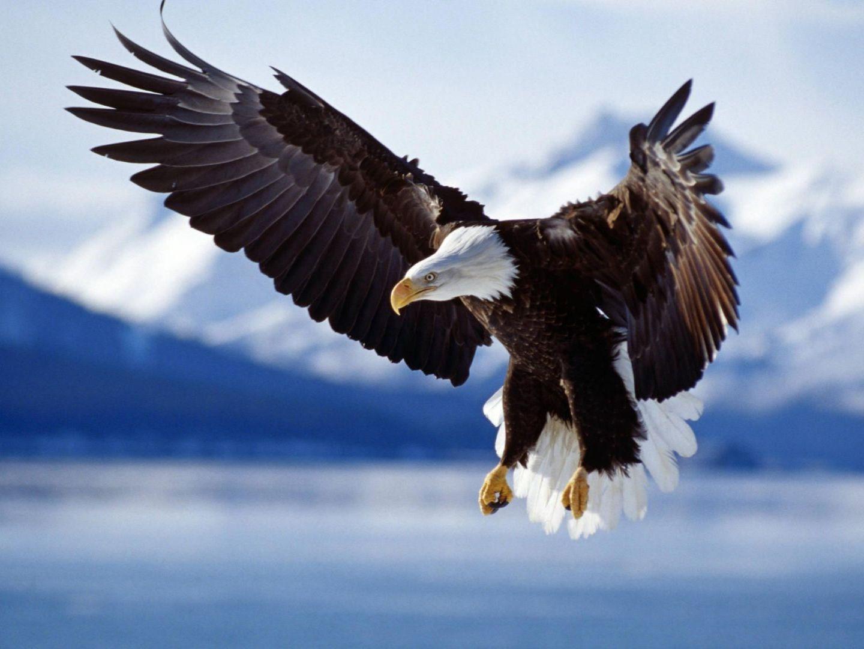 Eagle Net Worth