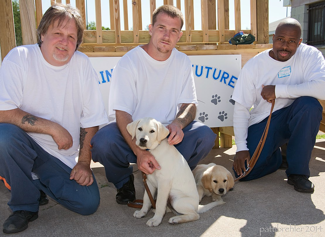 Three men are squatting in front of a wooden staircase on the cement, all are wearing blue prison pants and white t-shirts. In front of the middle man is a small yellow lab puppy, who is sitting and looking at the camera. Between the middle man and the man on the right a small yellow lab/golden retriever mix puppy is lying down with his head facing the camera. The man on the right, an african american, is holding the leash to the puppy lying down.