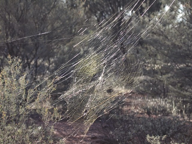 Synthetic Spider Silk Capsules Assemble Themselves | WIRED