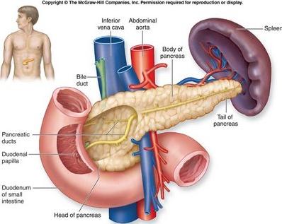 Obat Alami Penyakit Diabetes