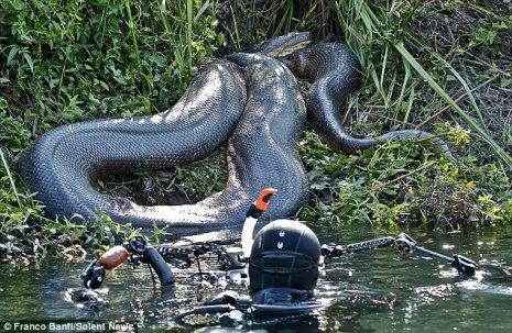 Ular Terbesar di dunia, Ular Raksasa di Hutan Amazon Brazil