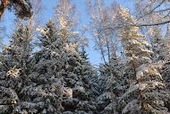 Talvimetsän kauneutta