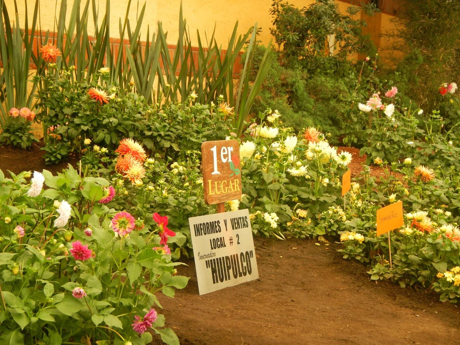 Mercado de plantas viveros de coyoac n heriberto el conejo for Viveros de plantas en lima