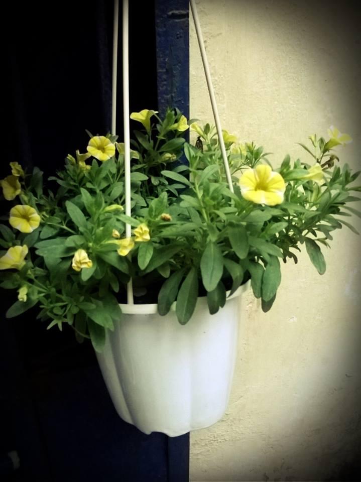 Chậu tròn móc treo trồng hoa