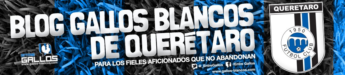 Blog Gallos Blancos de Queretaro