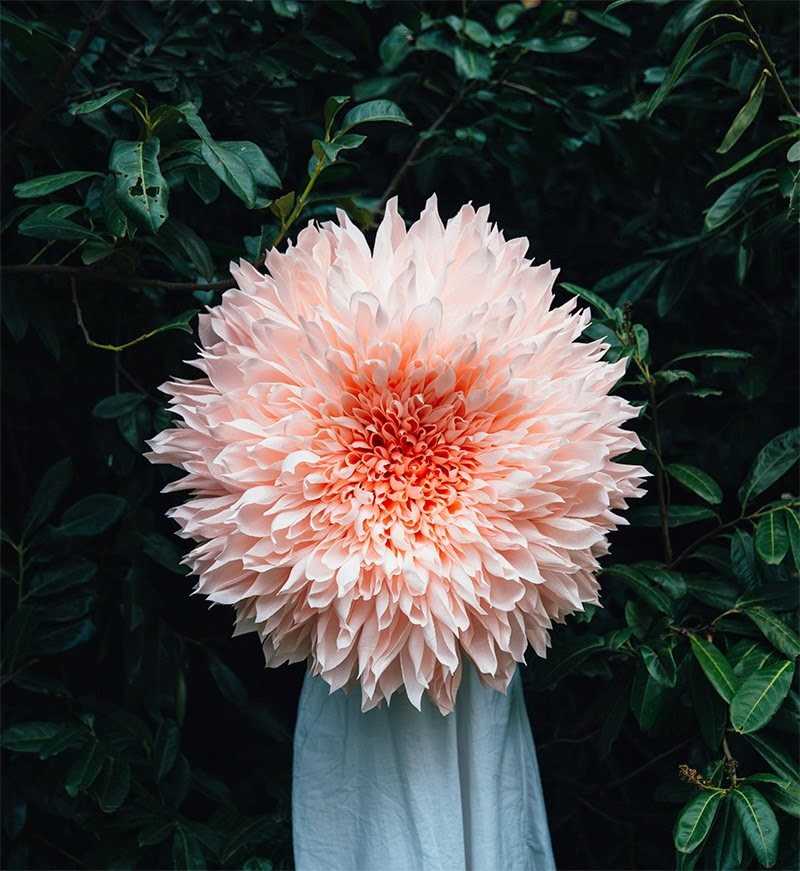 Simply creative giant paper flowers by tiffanie turner the exploration of scale plays heavily into everything i do and the organized chaos and rhythms in nature make the heads of flowers an excellent case study mightylinksfo