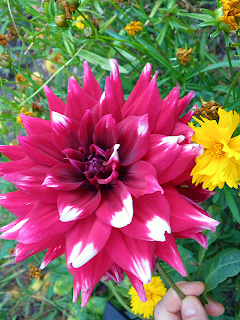Magenta Dahlia and Yellow Calendulas