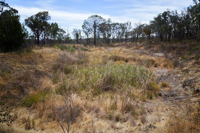 poverty gully basin goldfields track