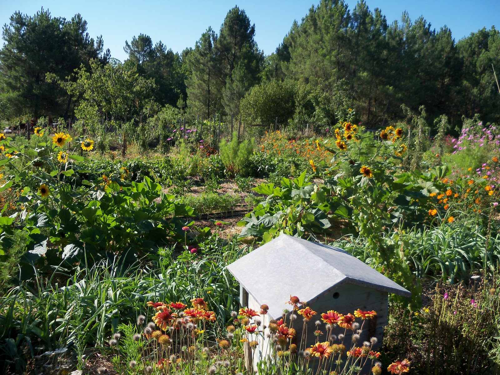 Les jardins de l 39 oasis de sebet for Les jardins de