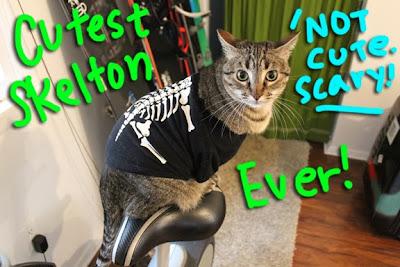 Halloween-cat-costume_01