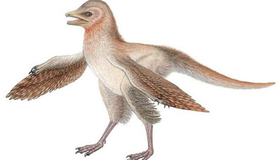 Nenek Moyang Burung