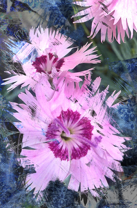 dianthus-flor-silvestre-detalle-composición-digital