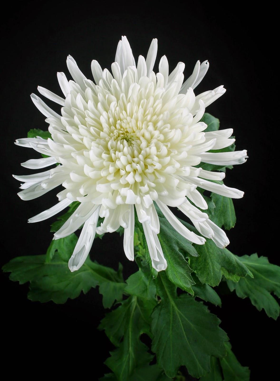 Imagenes De Centros De Flores Para Difuntos - Día de los Muertos: así se vive esta fecha en Perú (FOTOS