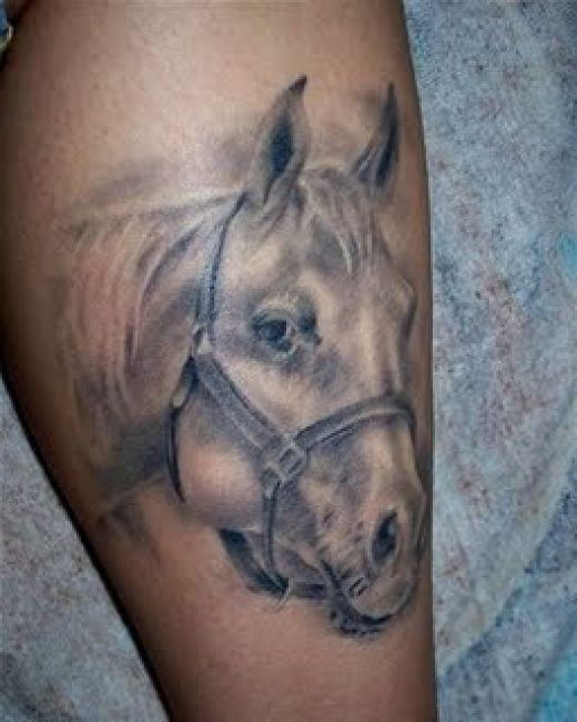 Tattoo Insights Horse Head Tattoos