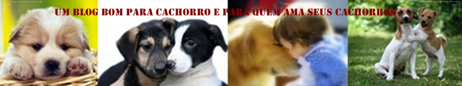UM BLOG  BOM PARA CACHORRO E PARA QUEM AMA SEUS CACHORROS