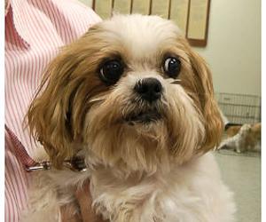 Wee Dog Rescue Austin Texas