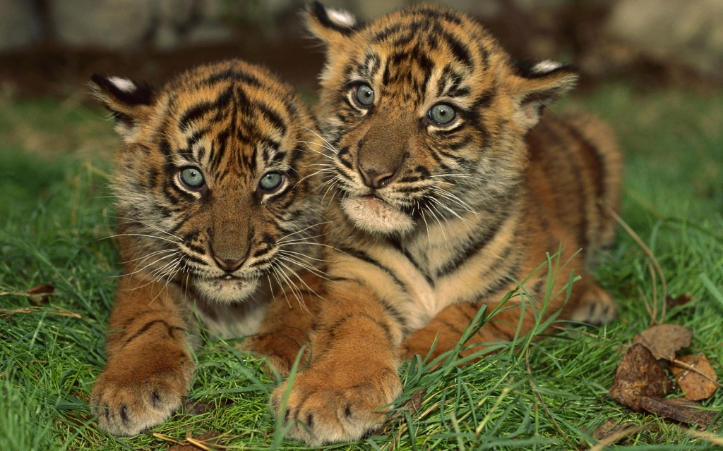 25 Cute Baby Animal Pictures | Amazing Creatures