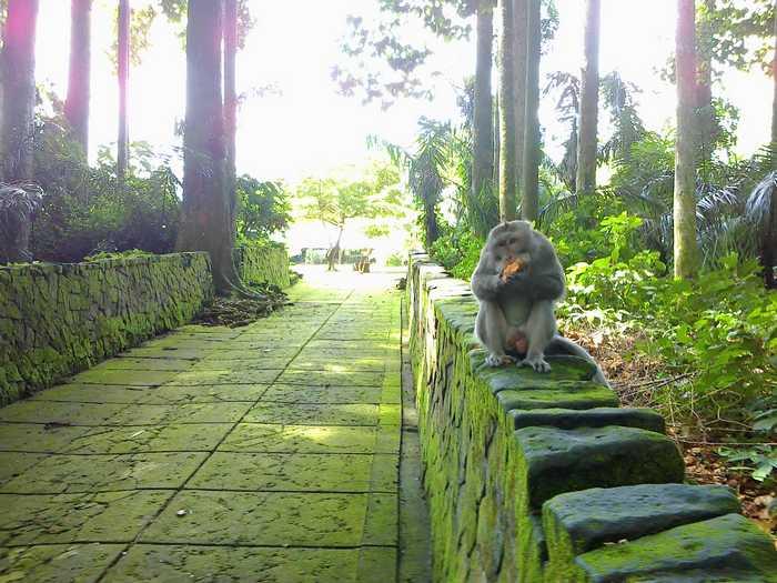 Monkey's in Sangeh Bali Indonesia
