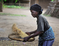 Malawi woman winnowing grain