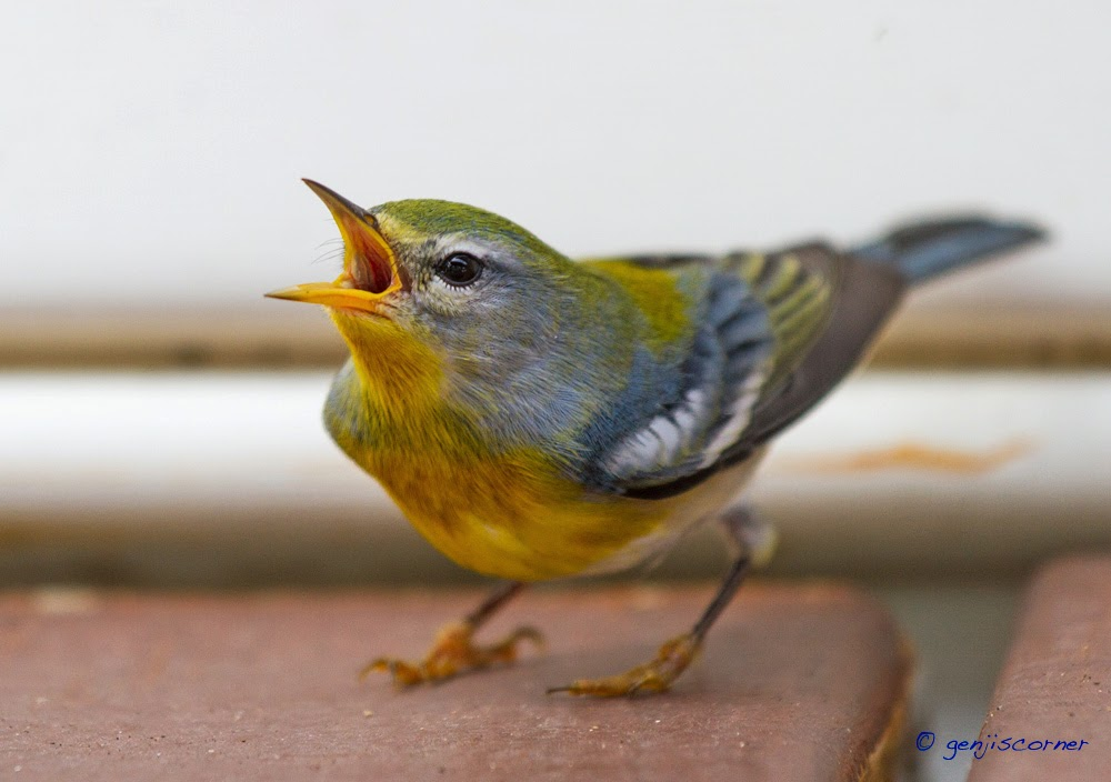 how to stop birds flying out of aviary door