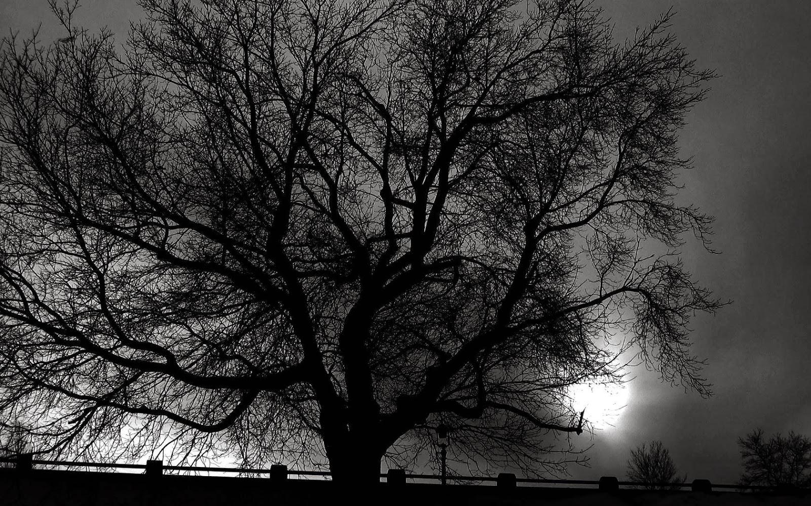 Fondo de pantalla naturaleza arbol solitario en blanco y negro for Fondo blanco wallpaper