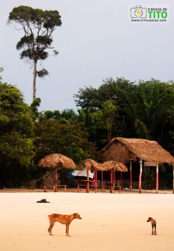 Barracas, cachorros e vegetação na praia do Vai-Quem-Quer, na ilha de Cotijuba, no Pará