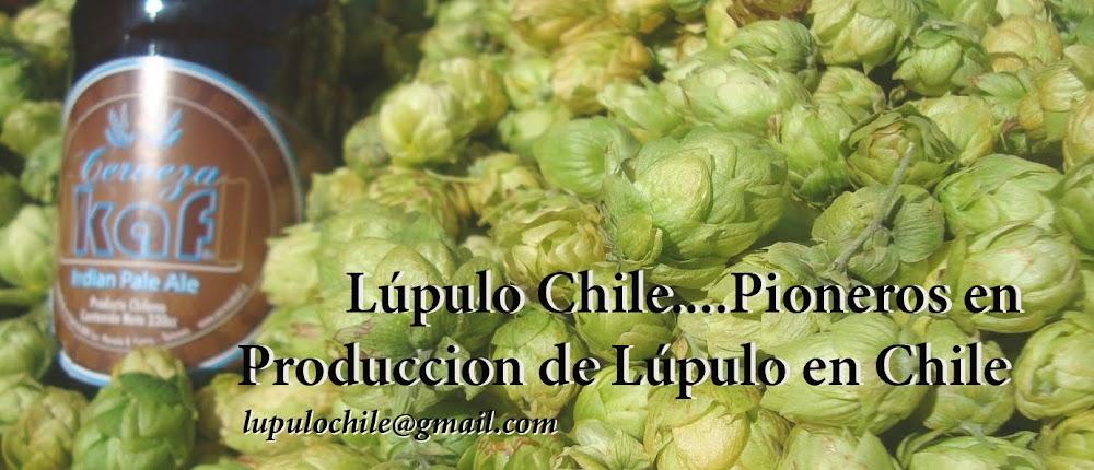 Lupulo Chile