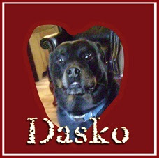 Dasko -My Wonderful Boy