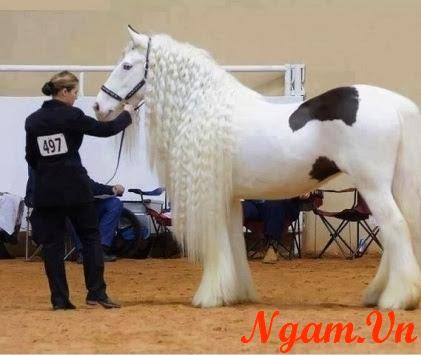 Chú ngựa đẹp nhất thế giới :D