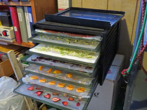 dehydrator full of food