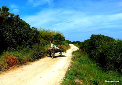животный мир Португалии