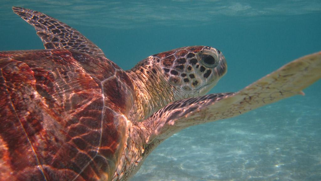 Chráníme mořské želvy