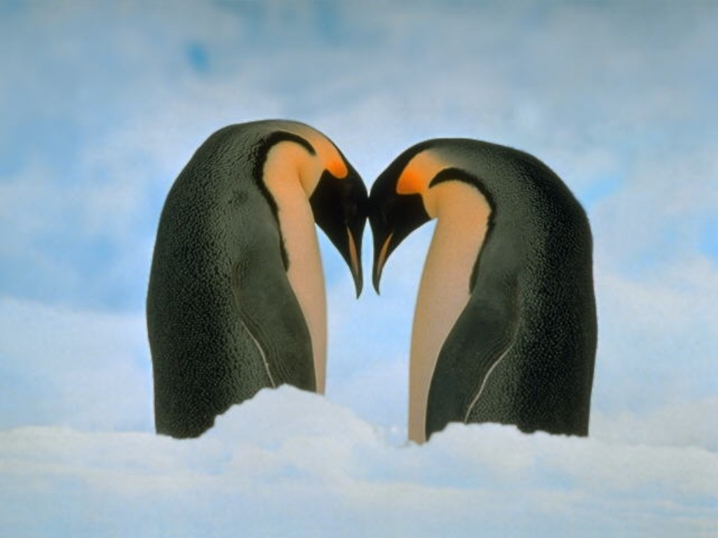 Lovable Images: Computer Background Images For Penguin