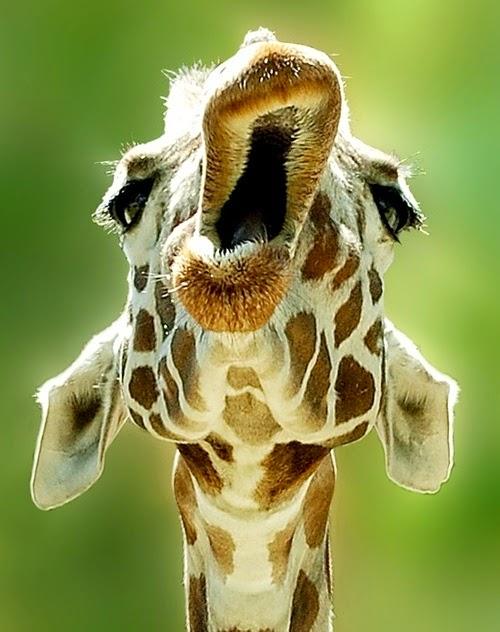 Забавные зверушки - Funny Animals
