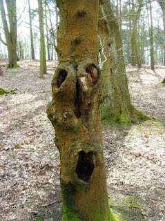 A tree with a face