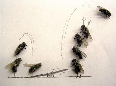 Afinal as moscas sao uteis depois de mortas Image009
