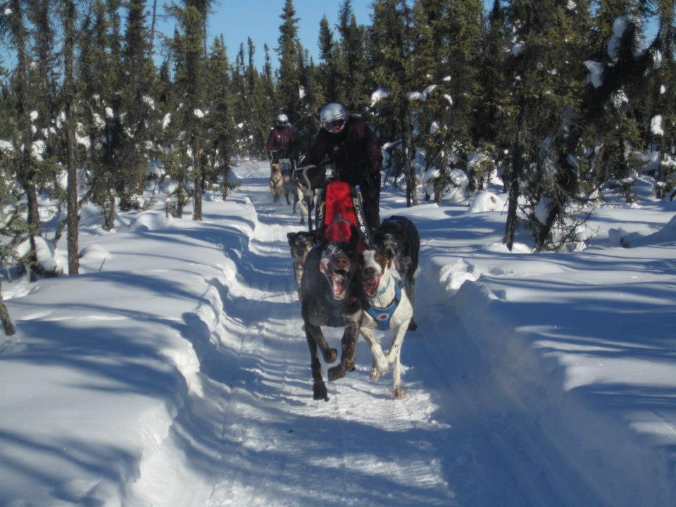 sled alaska homework help