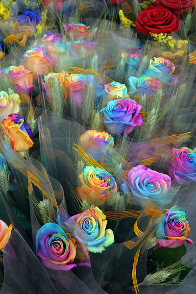 How to make rainbow roses a step by step guide lgbt news for Pictures of rainbow roses
